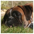 Réglement de Training & Breeding 458031867